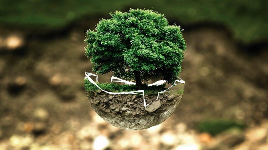 ambiente e sviluppo, albero in una boccia di vetro
